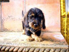 Andy de Sierra Onuba. es un cachorro cariñoso y encantador.