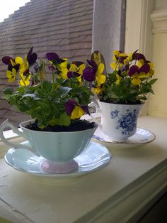 A great way to use those old, yet gorgeous, tea cups you inherited from someone.  Use a very small potted plant to put into the cup.  You can use as decorations or give as a gift.