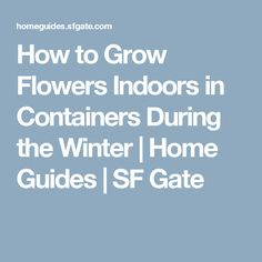 How to Grow Flowers Indoors in Containers During the Winter | Home Guides | SF Gate