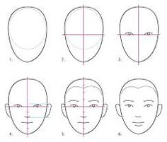 female face proportions
