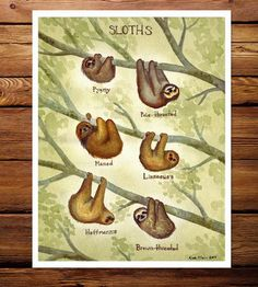 This watercolor art print provides a look at the different personalities and physical attributes of sloths around the world. Each species is illustrated hanging from the same tree, every variety neatly labeled with its name in paint. The archival quality print is reproduced in an easily-framed size and signed by the artist, a keepsake for sloth lovers or a charming addition to a child's bedroom.