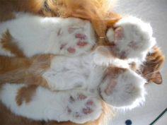 肉球まる見え。ガラスの下から見上げた猫も可愛い写真17枚