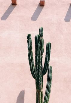 Colour palette ideas and inspiration for art and design projects. Green cactus against a pale pink textured wall. Love this image. Plants on pink. Murs Roses, Deco Rose, Plants Are Friends, No Rain, Cactus Y Suculentas, Blog Deco, Desert Life, Pink Walls, Cacti And Succulents