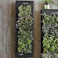 Love this idea and keeps my dog from destroying my herbs. Rectangular Chalkboard Wall Planter at Williams-Sonoma
