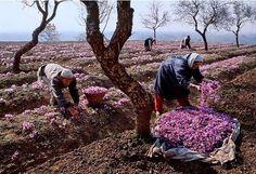 Steve McCurry in Kashmir