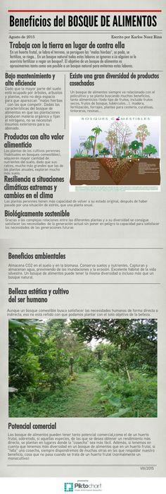 Beneficios del bosque de alimentos | @Piktochart Infographic
