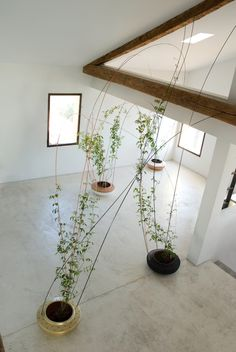"Thomas Alonso    ""a support structure to grow climbing plants in an indoor environment"" : How amazing would this be?!"