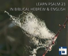 Learn Psalm 23 in Biblical Hebrew and English
