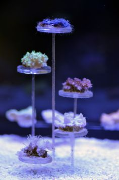 CalmSeasQuest Desktop Tank and DIY CSQ Skimmer - Page 5 - Reef Central Online Community