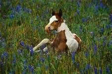 horses pictures - Bing Images