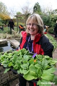 Access to HE Horticulture Diploma (Level Enfield Middlesex, University Courses, Gardening Courses, Level 3, Horticulture, September, College, Vegetable Gardening, University