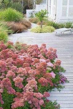 Très beau Jardin d herbacées oú une trouffe de Sedum 'Matrona' colore cet espace en fin d été. Www.monjardin-materrasse.com