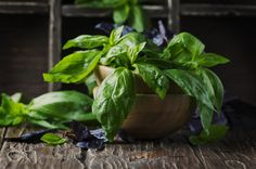 Bunch of fresh basil on the vintage table by OxanaDenezhkina  IFTTT 500px aroma background basil bunch close-up cooking food fresh freshness garden green health