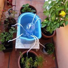 cómo regar las plantas en vacaciones