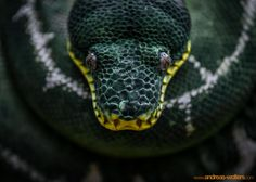 Eye of the.. snake? by Andreas Wolters on 500px