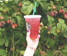 Summer is in season. Teavana Blackberry Mojito Tea Lemonade. This is stuff is so good - even without the lemonade.