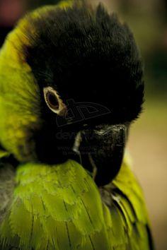 Harley! Nanda Conure Pretty Birds, Love Birds, Beautiful Birds, Parrot Perch, Parrot Bird, Exotic Birds, Colorful Birds, Nanday Conure, Nice Picture