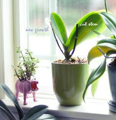 #How to keep orchids alive after they bloom!