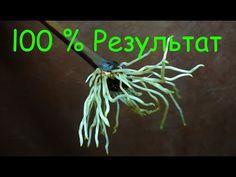 Проращивание черенков винограда, 100% результат !!! - YouTube Ottawa, Hair Styles, Youtube, Gardening, Life, Hair Plait Styles, Hair Makeup, Lawn And Garden, Hairdos