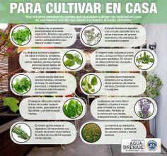Las mejores hierbas para tu cuerpo. The best herbs for your body.