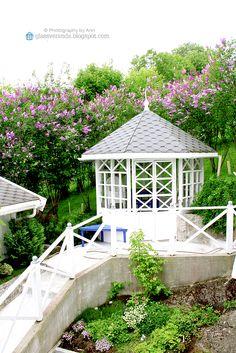 Lilacs, Outdoor Spaces, Outdoor Gardens, Gazebo, Bloom, Interior, Photography, Instagram, Design