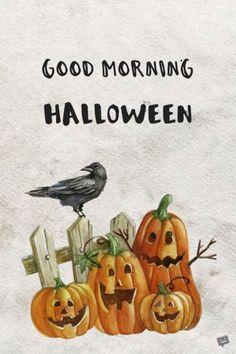 Good Morning, Halloween. Good Morning Happy, Good Morning Greetings, Good Morning Wishes, Good Morning Images, Good Morning Quotes, Funny Halloween Pictures, Happy Halloween Quotes, Halloween Images, Halloween Eve