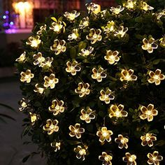 Waterproof Warm White Christmas Lamp Solar String Lights 50 LED Flower Blossom Decorative Light for Outdoor Indoor Garden Patio Party Xmas Tree Decorations - Warm White Sakura - - Seasonal Décor, Seasonal Lighting, Outdoor String Lights # # Flower Fairy Lights, Solar Fairy Lights, Solar String Lights, String Lights Outdoor, Outdoor Lighting, Lighting Ideas, Landscape Lighting, Christmas Lamp, Christmas String Lights