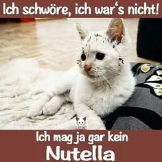Kitty robbed the Nutella Jar, but forgot to erase the evidence.