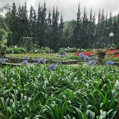 Green green gardenn