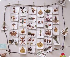 display of treasures from nature suspended on a frame made out of branches!