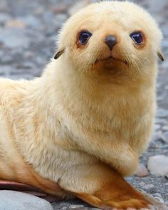 Wanna get seal-ed with a kiss?
