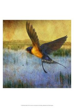 Barn swallow, by Chris Vest  (And barn swallows are my favorite birds.  Wonders at flight, sweet song, gorgeous color, cleaver house-builders...They have it ALL!)