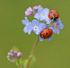 ...Yes Ladybugs