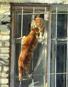 Ginger Romeow and Mewliet....