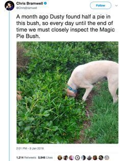 17 Tweets That Prove That Dogs Are Very Very Smart But Also Dumb