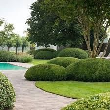 cloud pruned topiary, garden by Tuinonderneming Monbaliu BVBA Garden Hedges, Topiary Garden, Garden Pool, Garden Architecture, Contemporary Garden, Garden Landscape Design, Landscaping Plants, Landscaping Ideas, Dream Garden