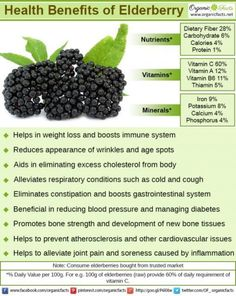 Some of the most important health benefits of elderberries include their ability to boost immune system function protect against bacteria and seasonal symptoms health health natural remedies aid Matcha Benefits, Coconut Health Benefits, Elderberry Benefits, Elderberry Recipes, Elderberry Cuttings, Elderberry Growing, Seamoss Benefits, Minerals, Vitamins