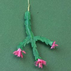 Tiny Christmas Cactus You Can Make: Paint the Leaves on the Miniature Christmas Cactus