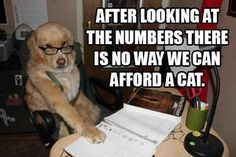 funny captions, animal memes, animal pictures with captions Funny Dog Memes, Funny Animal Memes, Cute Funny Animals, Memes Humor, Funny Cute, Funny Shit, Funny Dogs, Funny Captions, Stupid Jokes
