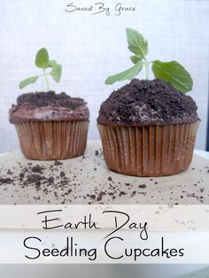 Seedling Earth Day Cupcakes - Recipe for chocolate cupcakes, mint chocolate frosting plus tips for decorating.