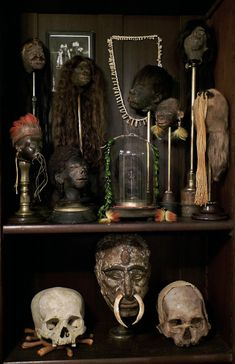 Ryan Matthew Cohn's oddities collection – neatly art The Dark Side, Shrunken Head, Historia Natural, Cabinet Of Curiosities, Museum, Skull And Bones, Weird And Wonderful, Memento Mori, Skull Art