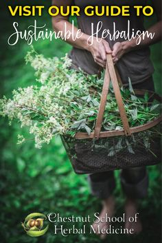 Everything You Need to Know About Sustainable, Bioregional Herbalism   #herbalife #herbalism #herbal #herbalist #herbs #foraging #wildcrafting #sustainable