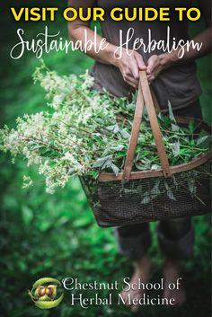 Everything You Need to Know About Sustainable, Bioregional Herbalism   #herbalife #herbalism #herbal #herbalist #herbs #foraging #wildcrafting #sustainable