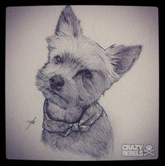 Hand drawn dog portrait of Yorkie, Joey.