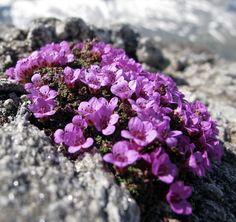 Ikebana, Wisteria, Garden Design, Amethyst, Backyard, Crystals, Flowers, Crafts, Photography