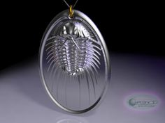 Aspidonia Trilobite Fossil pendant ~ 48mm in Polished Silver