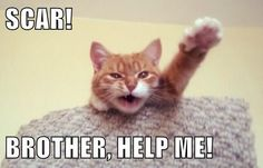 Scar! Brother help me! #catoftheday