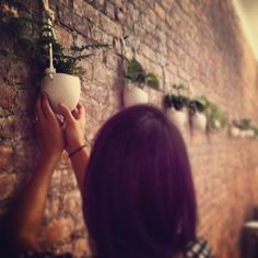 plant install by The Sill at Brew PR in NYC