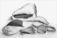 Shell drawings- grade 9