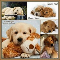 ~Katarina~College by Miss Katarina Good Night Quotes, Good Morning Good Night, Night Time, Kittens And Puppies, Baby Kittens, Collages, Dream Night, Good Night Sweet Dreams, Beautiful Dogs